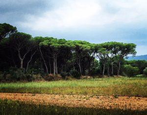 Landscape around Calella